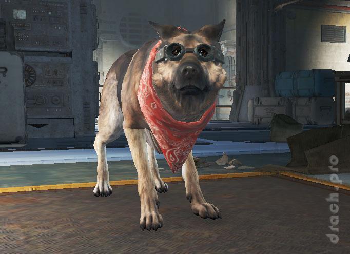 Fallout 4 псина